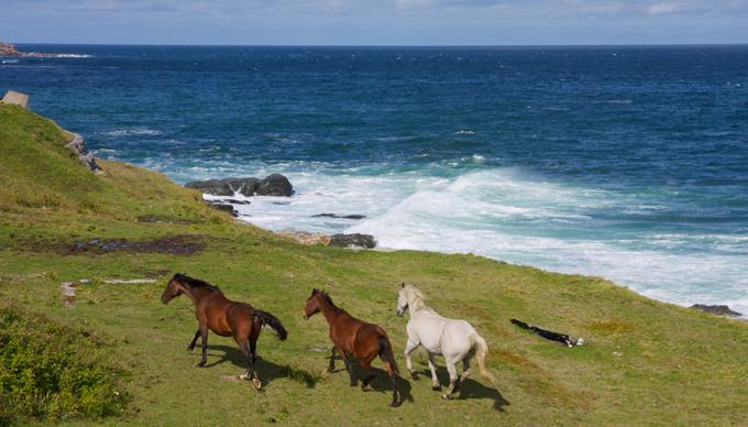 Horses at Money Point. Photo credit - Greg Jurczyszyn. 1st Place tie - Fauna